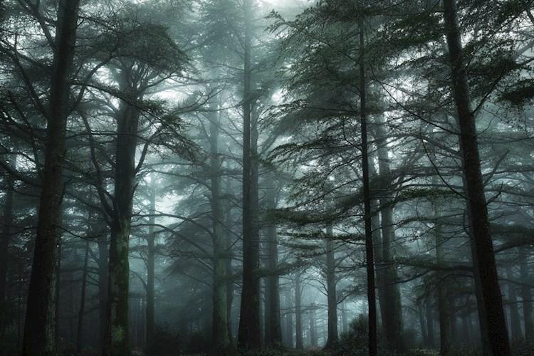 Наследие Темного Леса. Альянс - Ник